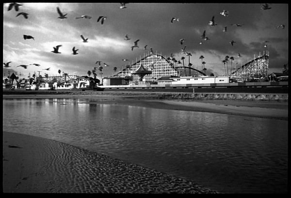 Finally, Seagulls at the Boardwalk.
