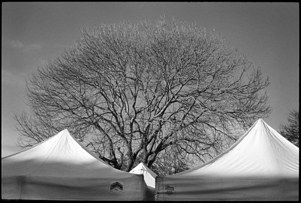 Tree and Tents. Taken at the Farmer's Market. I made a similar photo at the Monterey Jazz Festival (see September 20, 2011 post).