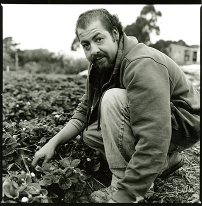"""Ricardo weeding strawberries in the """"Back 40"""" at the Homeless Garden Project."""