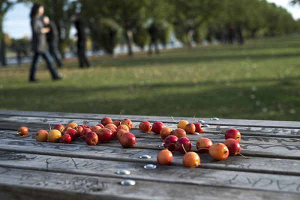 Tiny apples, waterfront park, Vieux Port.
