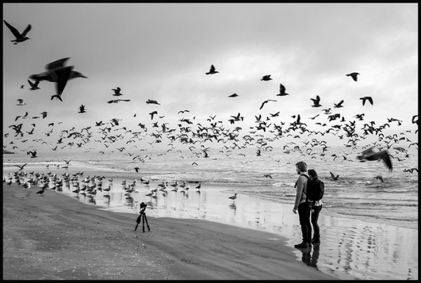 This afternoon on the beach- self portrait with seagulls!