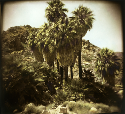 A Holga view of the 49 Palms Oasis in Joshua Tree National Park. Shot on film, printed in a darkroom, sepia toned and hand colored! It's an original, one of a kind!