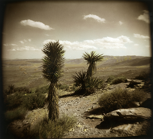 Another hand colored, darkroom printed photo from Joshua Tree National Park.