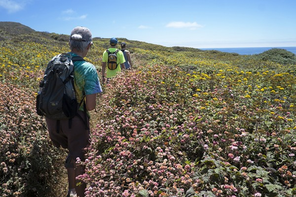 On the trail and in the flowers. Summer in Big Sur!