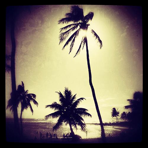 Palms, Poipu Beach, Kauai