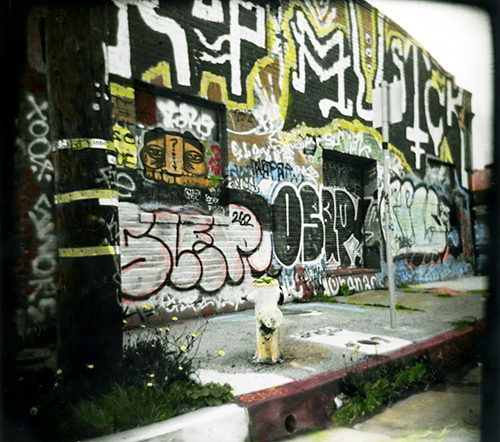 A recently finished hand colored Holga scene in Berkeley, CA.