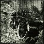 August 22, 2008, Olive's bike