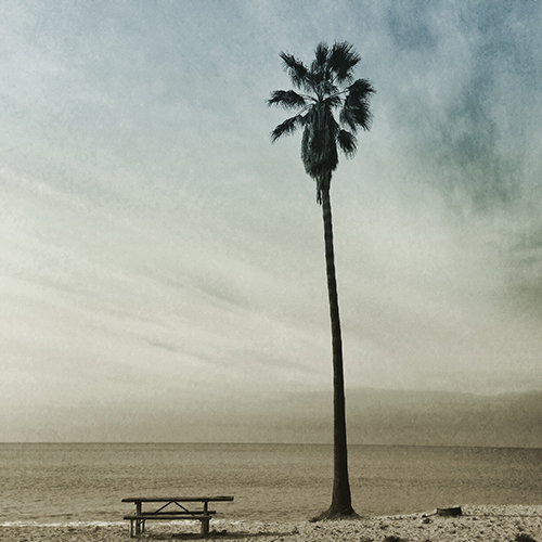 Picnic table and tall palm, Doheny State Beach.