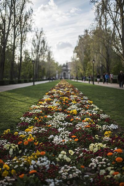 Parque del Retiro, a 17th century royal retreat and a fantastic urban park!