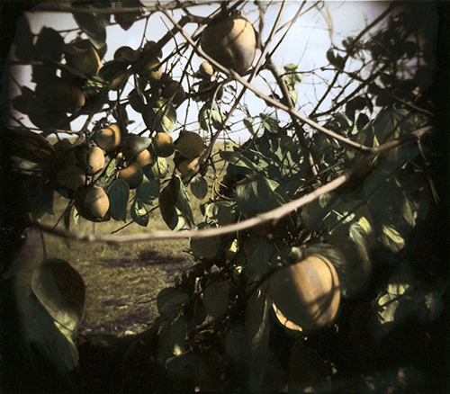 Another photo from my early  days using a Holga. This one was taken at the UCSC Farm circa 1993.
