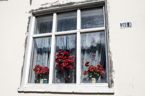 Window scene.